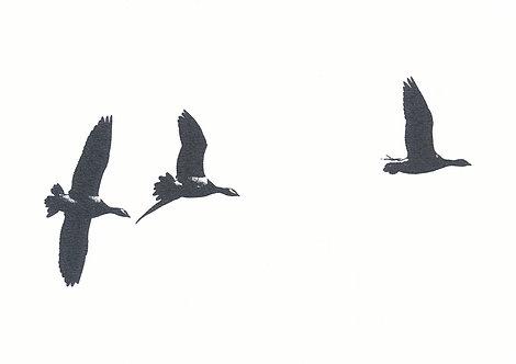 Henri Hiltunen / Birds 5
