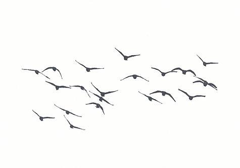 Henri Hiltunen / Birds 1