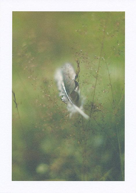 Maria Virtanen / Art of Bokeh-Feather