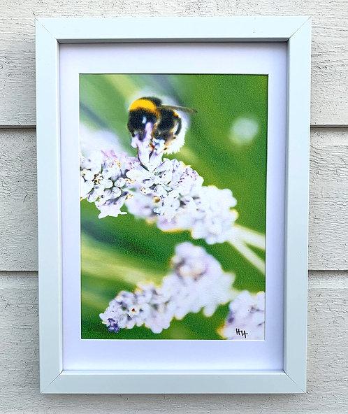 Henri Hiltunen / Bumblebee