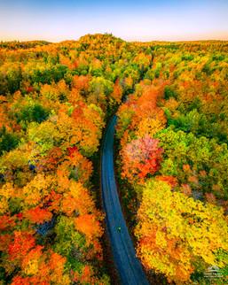 Autumn Colour Cover