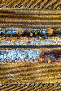 Corn Pattern 3