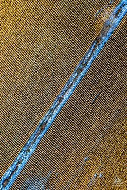 Corn Pattern 2
