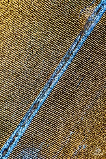 Print 3-017 - Corn Pattern 2