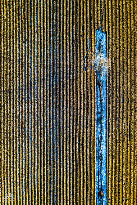 Corn Pattern 1