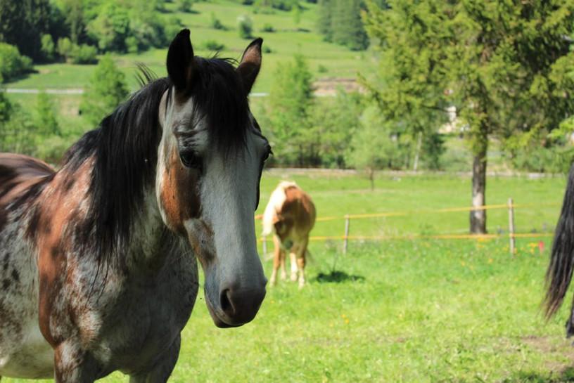 cavallo sfondo.jpg