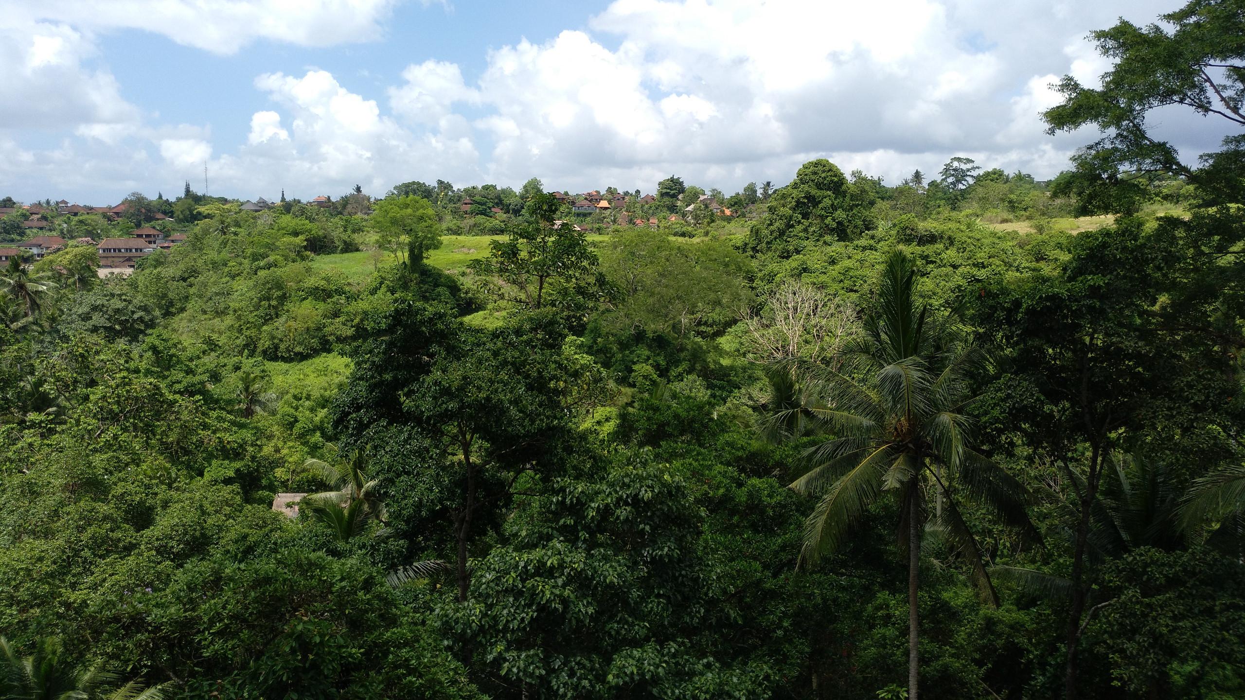 Balinese Jungle