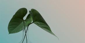Walking the Talk: Blank Canvas, New Leaf