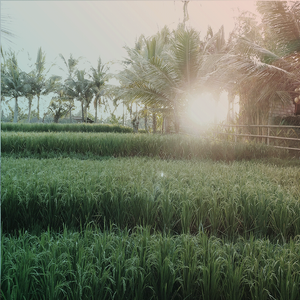 Sunrise at 5.45am in Bali