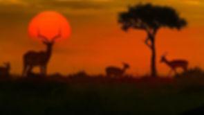 133608_African-safari-sunset-with-silhou