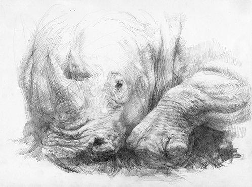Study (Rhino) FRAMED