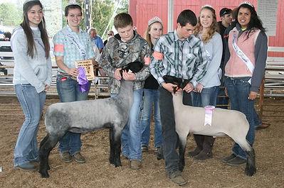 2015 Linn County Lamb & Wool Fair Royal Cort with the 2015 Sheep Show Champion Lambs