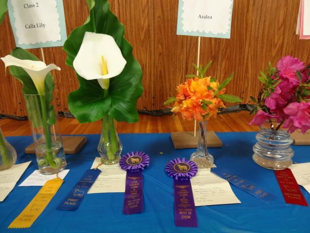 flower show 2013