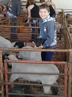 2017 Linn County Lamb & Wool Fair Sheep Show, Ryan Davis with his lambs