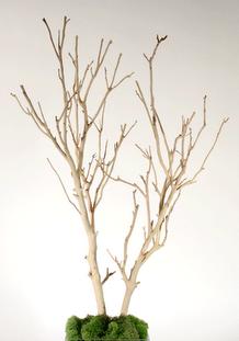 Bleached Manzanita Branches