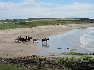 horses on dunaverty beach.JPG