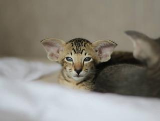 """Všechna koťátka z vrhu """"J"""" jsou již v nových domovech!"""