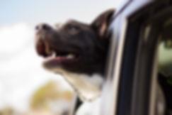 dog-1149964_1920.jpg