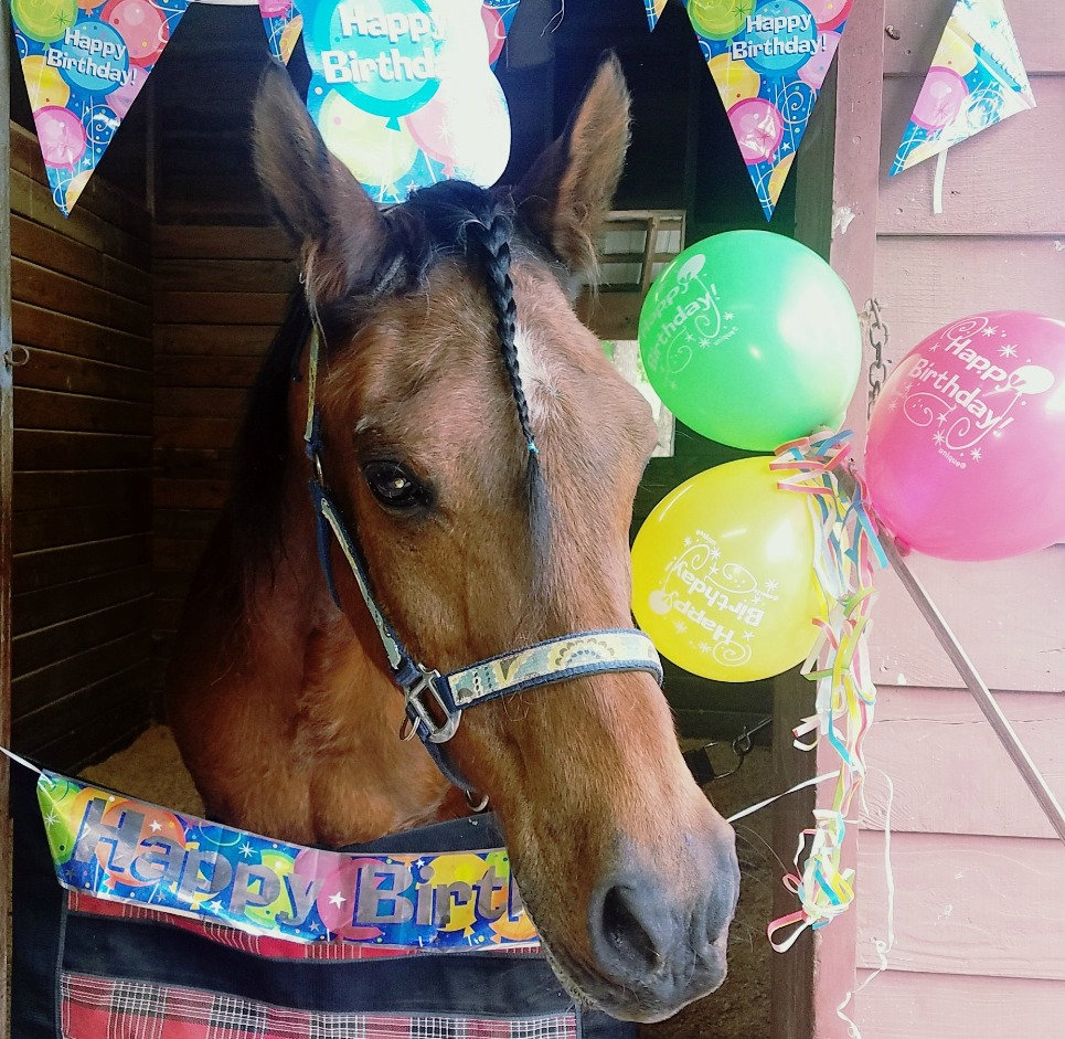 Birthday Party (1 horse)