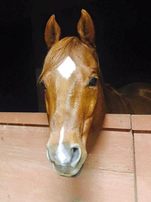 Adopt a Horse - 1 Month Sponsorship