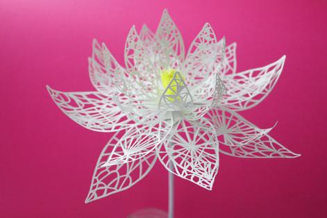 Fleur dentelle