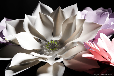 Fleur sensuelle