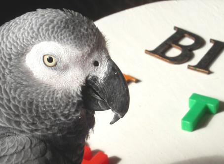 Helpful Parrots Teach Us Kindness