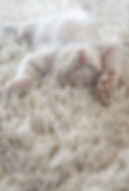 a cute cat lying on carpet, almost same