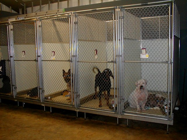 indoor_kennels2