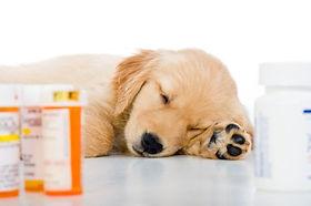 pet+pharmacy.jpg