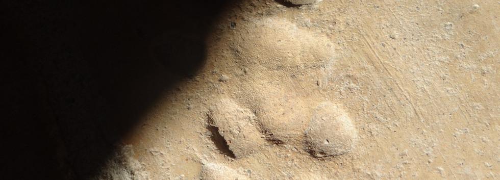 La preuve que le loup est venu dans la cabane