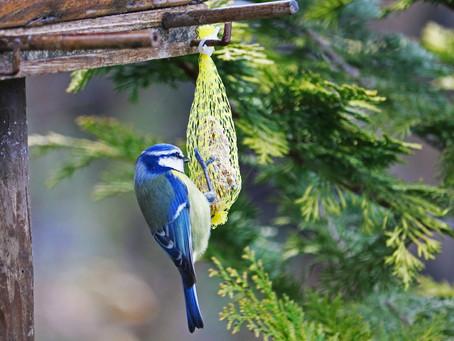 Comment faire une boule de graisse maison pour nourrir les oiseaux ?