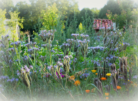 Permaculture, découvrir, essayer, voir, comprendre ...