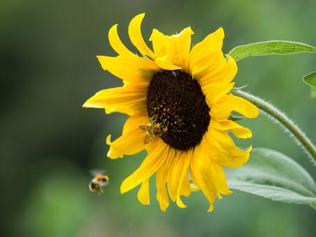 Comment attirer les insectes pollinisateurs au jardin ?
