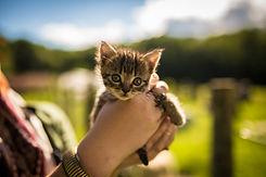 camping qui accepte les chiens et les chats
