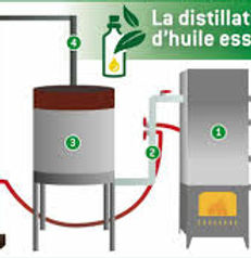ditillation huile essentielle.jpg