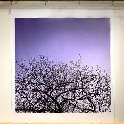 ターポリンプリント「月桜」