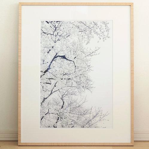 額入りプリント「桜02」