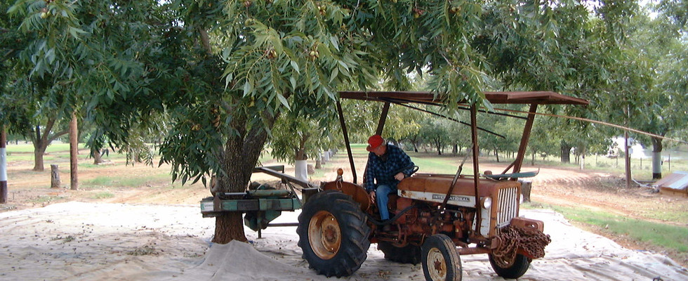 Yes, this tractor still works but the shaker is a bit small for the size of the trees.