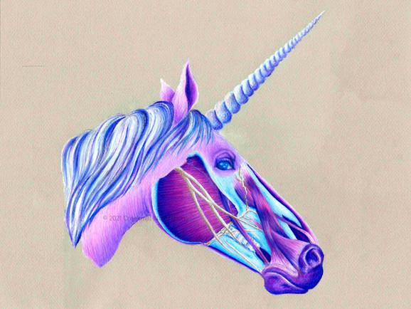 Unicorn Head - Fantasy Anatomy