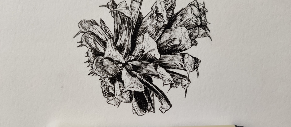 The end of my Botanical Illustration course and NSI program during a pandemic