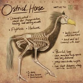 Ostrich Horse Skeleton Overlay - Fantasy Anatomy