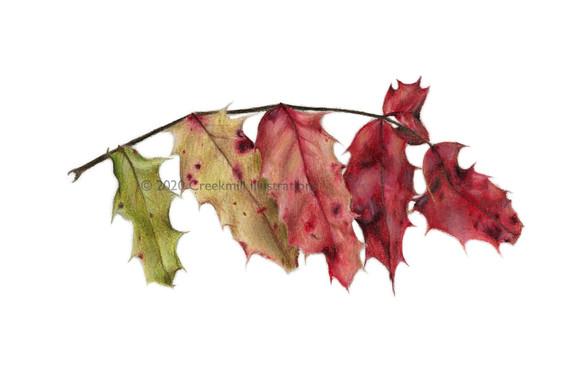 Gradient Leaves