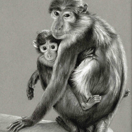 Sooty Mangabey Mother and Baby
