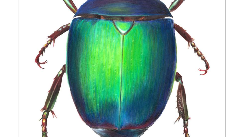 Flower Beetle Sticker