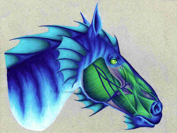 Hippocampus Head - Fantasy Anatomy