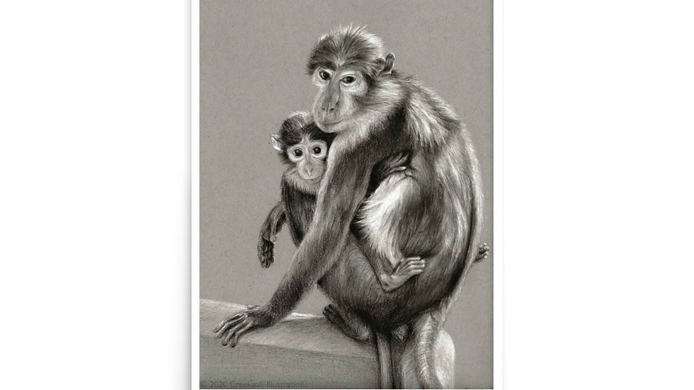 Sooty Mangabey Mother and Baby Poster