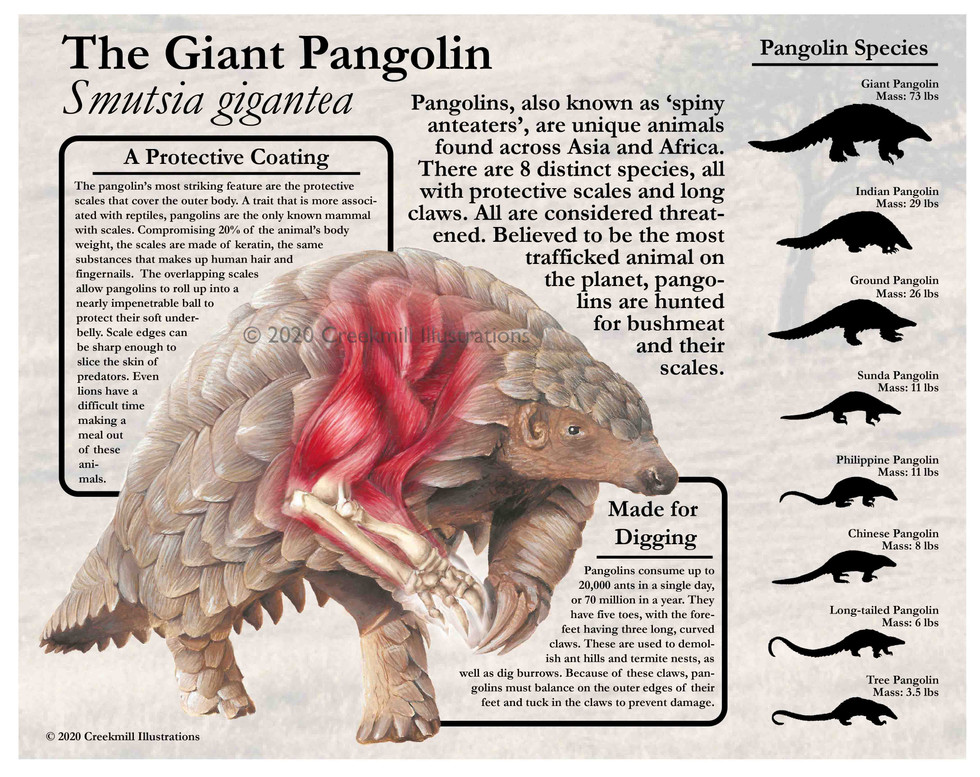 The Giant Pangolin Poster