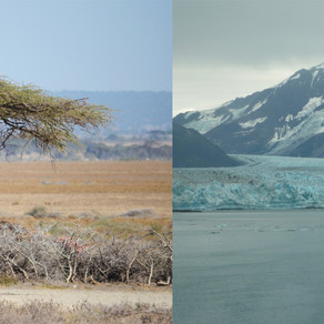 From the Grasslands of Serengeti to Glaciers of Alaska
