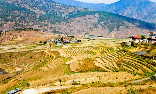 Situated along the banks of these rivers, the soil is blessed with rich alluvial soil which makes Punakha, the rice bowl of Bhutan